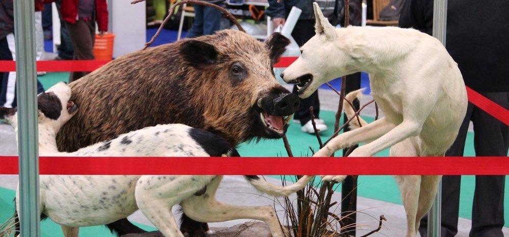 Feria de Caza y Pesca 2011 (125)