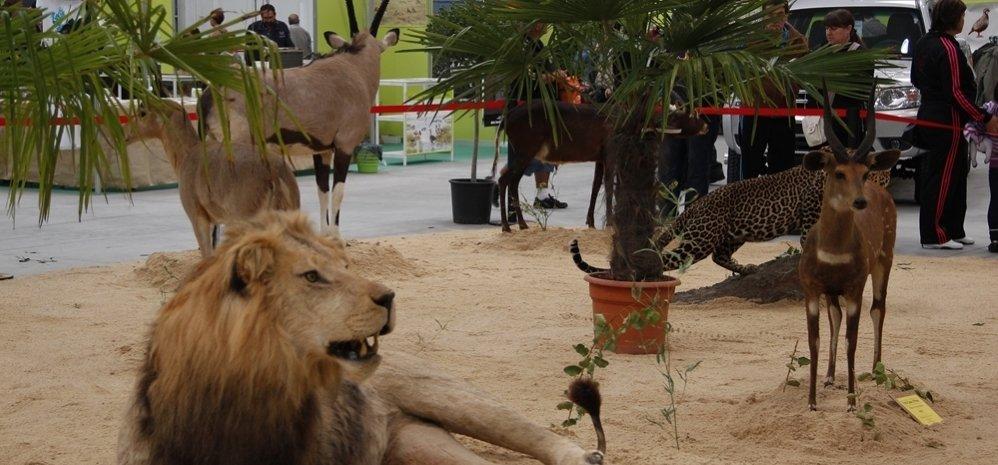 Feria de Caza y Pesca 2012 (115)