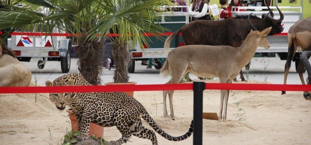 Feria de Caza y Pesca 2012 (83)