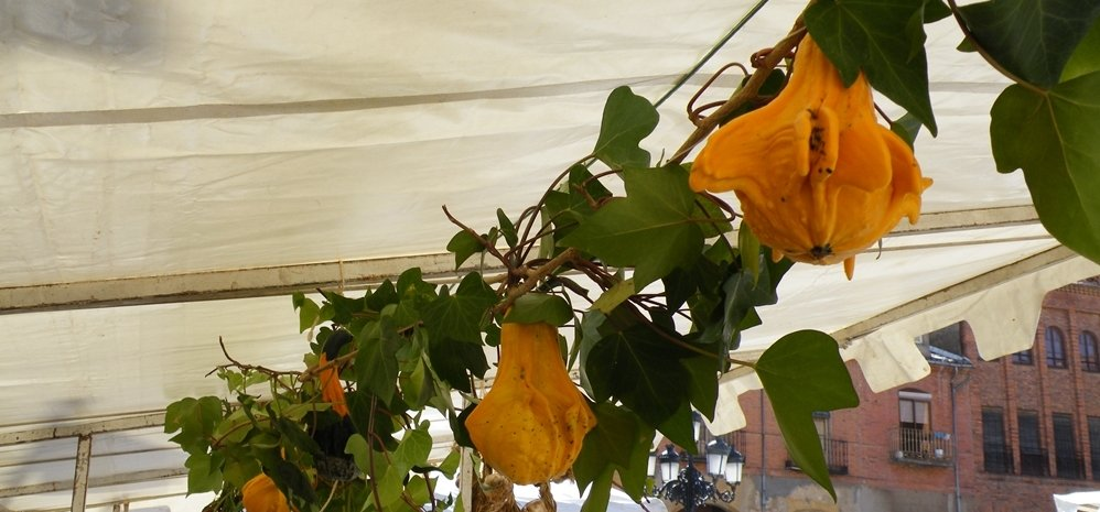 Feria del Pimiento (8)