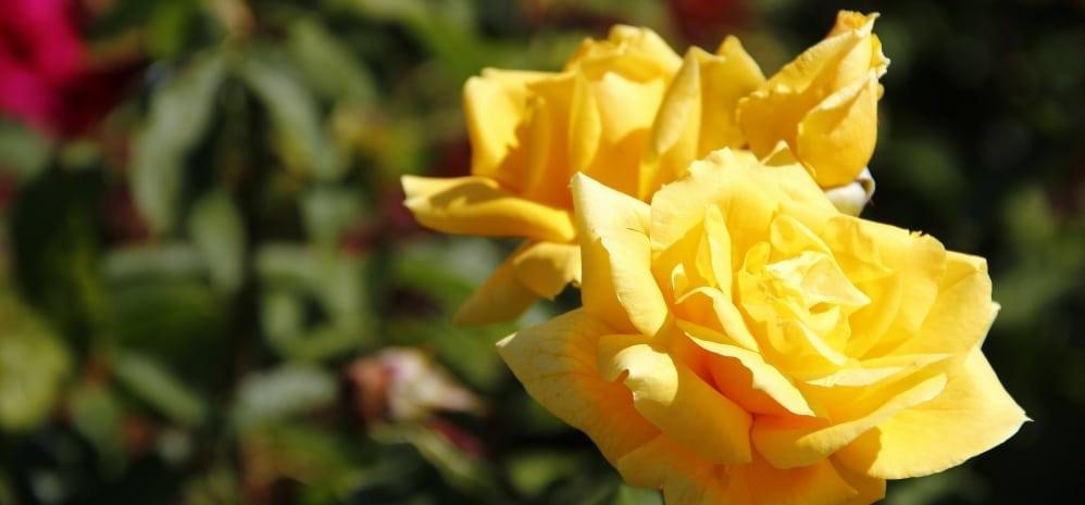 Jardines de la Mota (17)