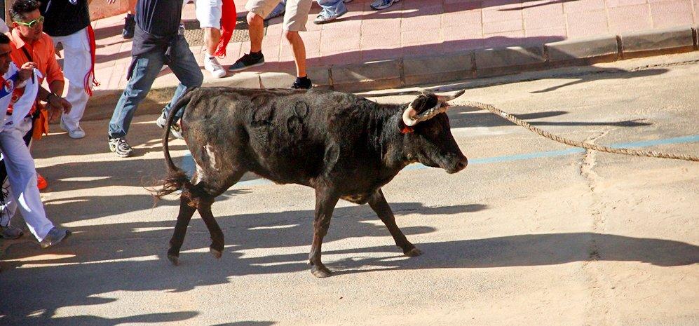 Toro Enmaromado (18)