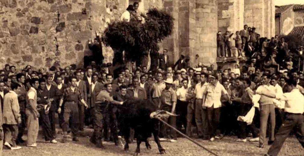 historia-toro-enmaromado
