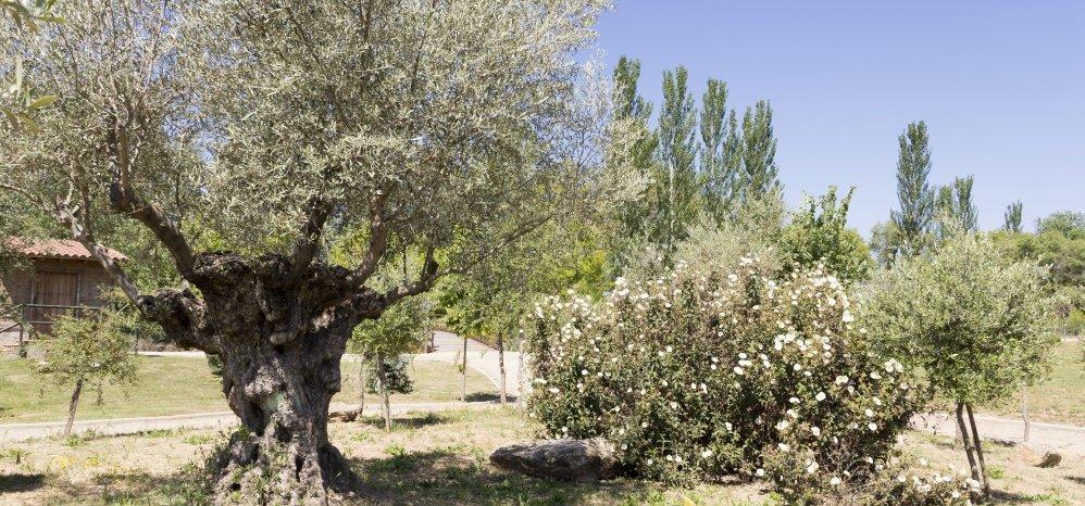 Jardin botanico Prado de las Pavas 2015 (11)