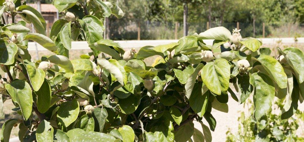 Jardin botanico Prado de las Pavas 2015 (18)