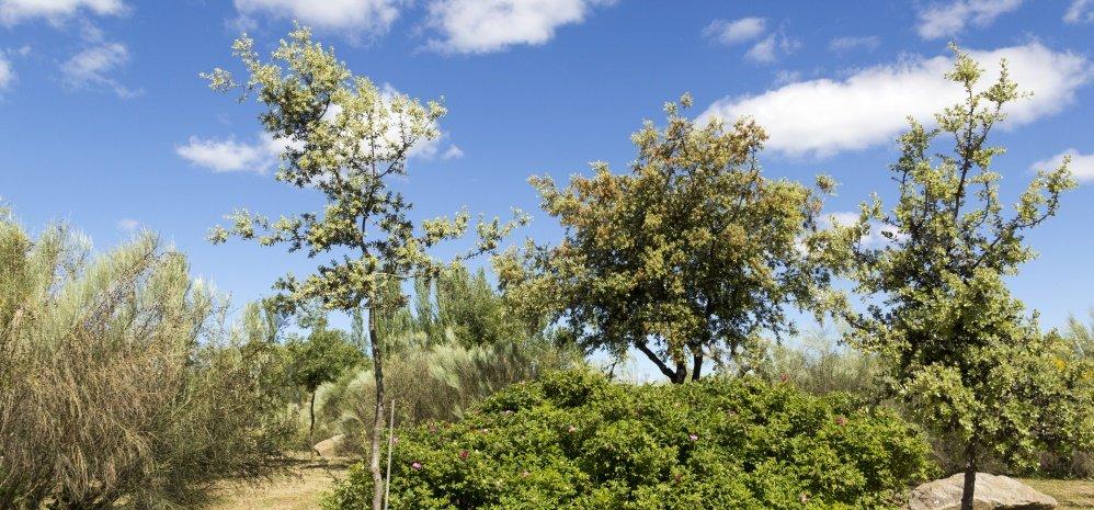 Jardin botanico Prado de las Pavas 2015 (35)