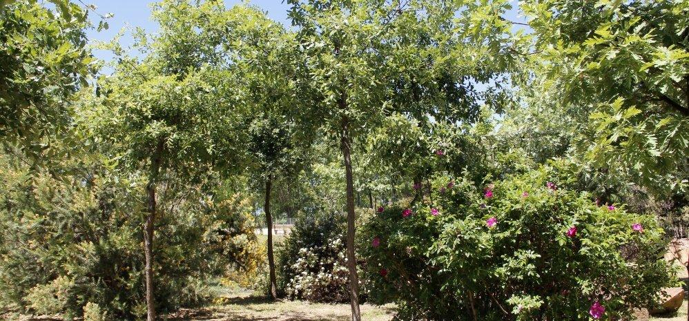 Jardin botanico Prado de las Pavas 2015 (49)