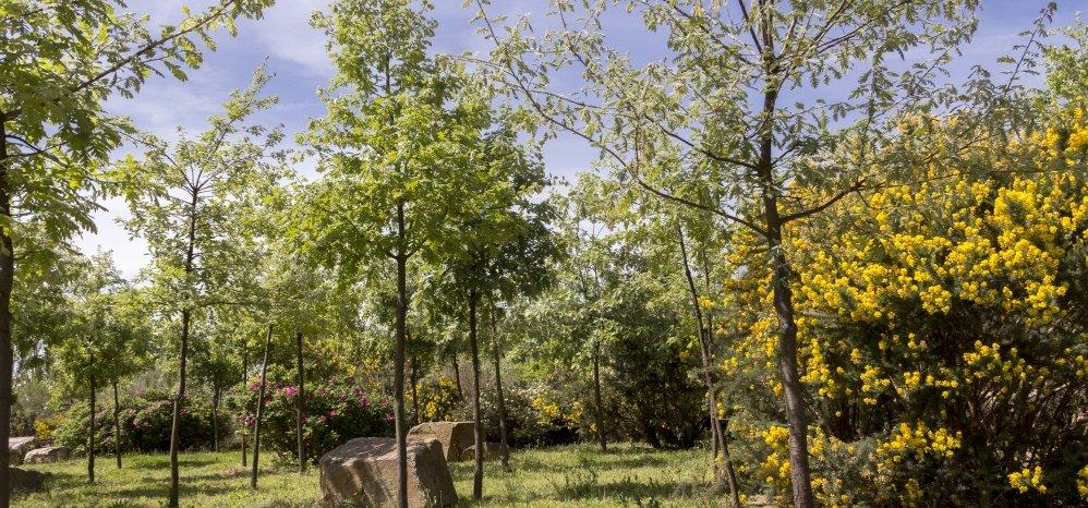 Jardin botanico Prado de las Pavas 2015 (59)