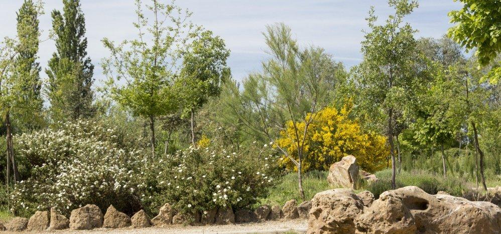 Jardin botanico Prado de las Pavas 2015 (60)