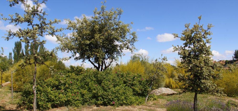Prado de las Pavas Jardin Botanico (100)