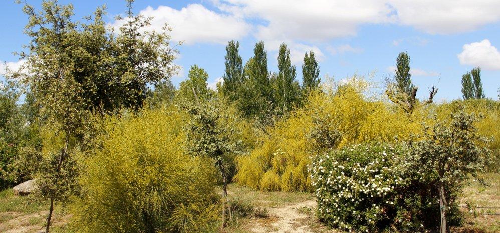 Prado de las Pavas Jardin Botanico (103)