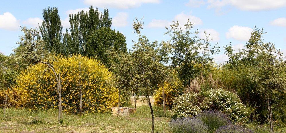 Prado de las Pavas Jardin Botanico (105)