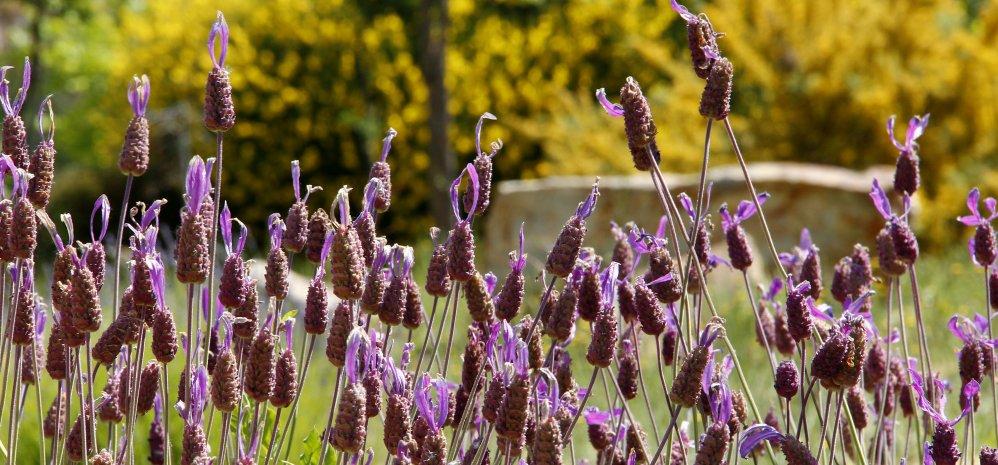 Prado de las Pavas Jardin Botanico (109)