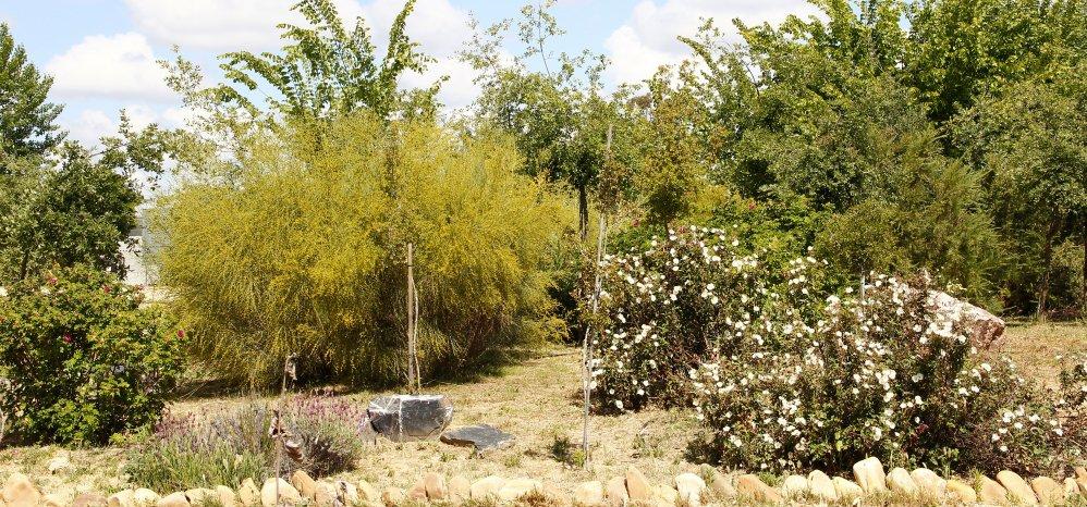 Prado de las Pavas Jardin Botanico (114)