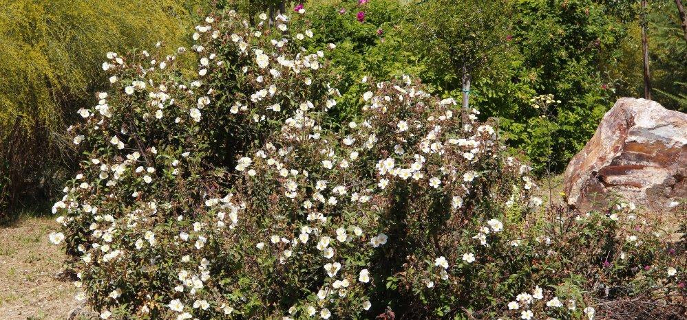 Prado de las Pavas Jardin Botanico (115)