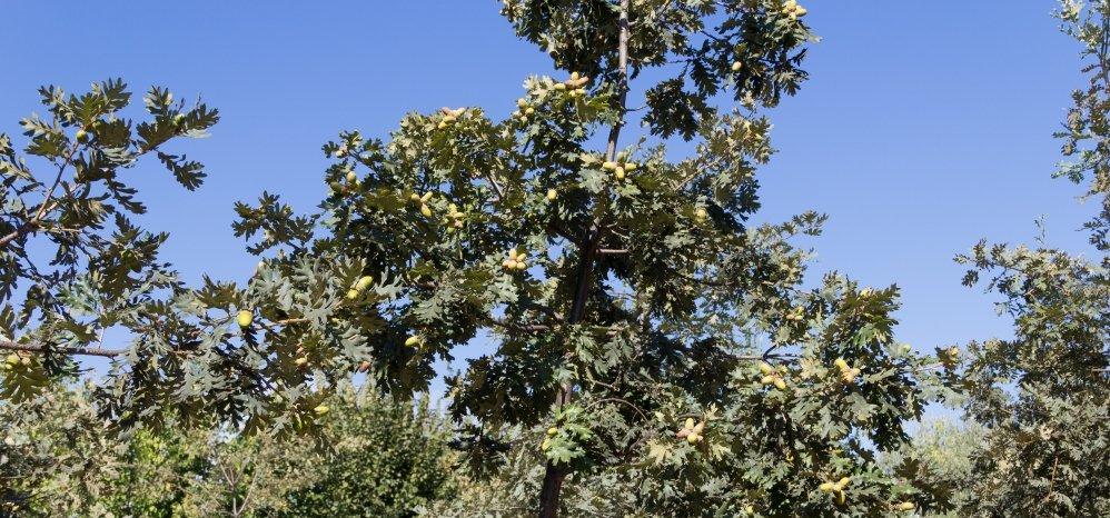 Prado de las Pavas Jardin Botanico (122)