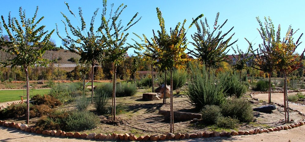 Prado de las Pavas Jardin Botanico (57)