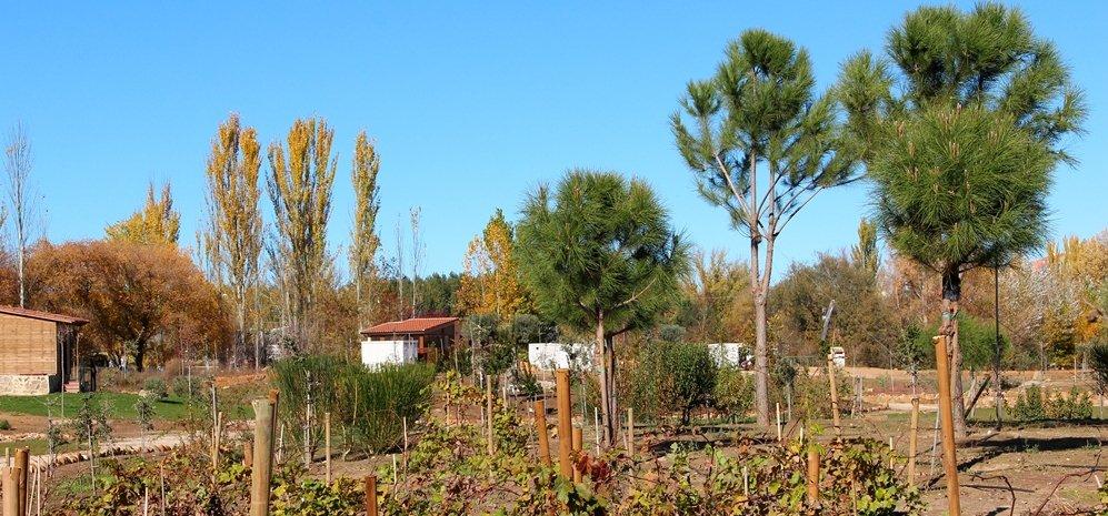 Prado de las Pavas Jardin Botanico (61)