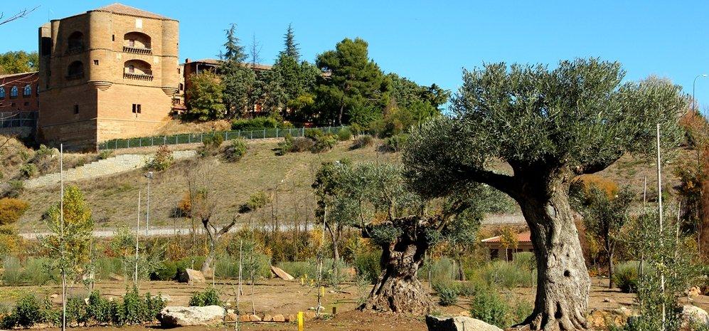 Prado de las Pavas Jardin Botanico (68)