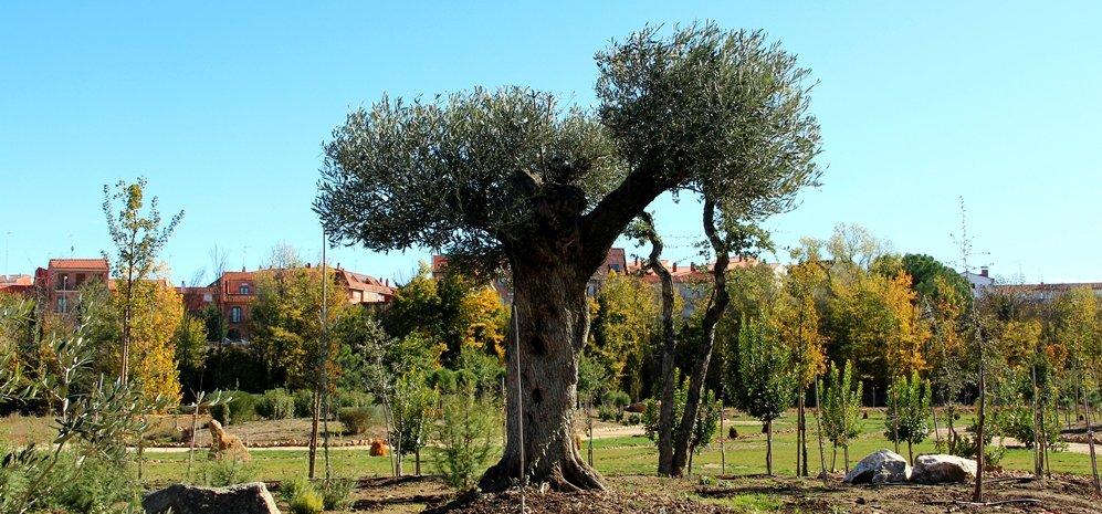 Prado de las Pavas Jardin Botanico (71)