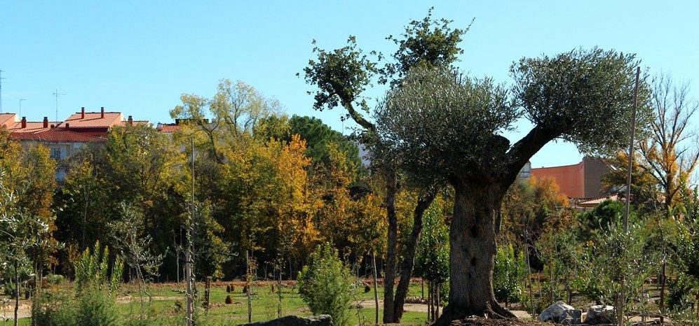 Prado de las Pavas Jardin Botanico (73)