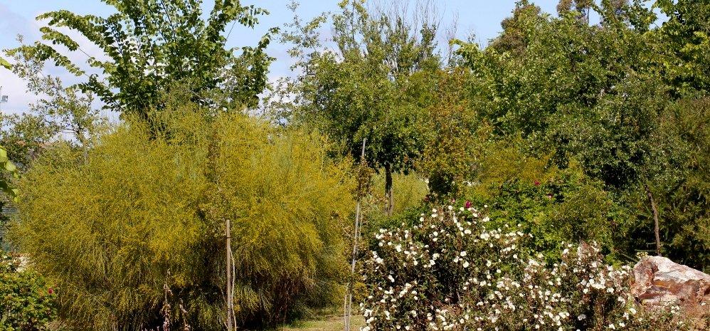 Prado de las Pavas Jardin Botanico (80)