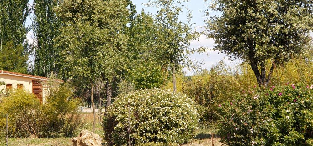 Prado de las Pavas Jardin Botanico (82)