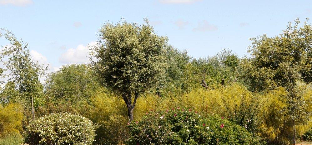 Prado de las Pavas Jardin Botanico (84)
