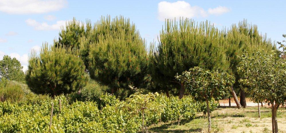Prado de las Pavas Jardin Botanico (87)