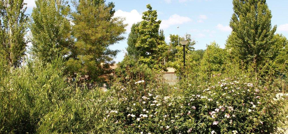 Prado de las Pavas Jardin Botanico (90)