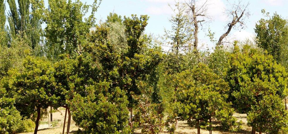 Prado de las Pavas Jardin Botanico (92)