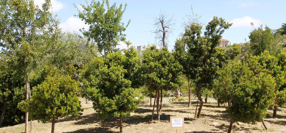 Prado de las Pavas Jardin Botanico (93)