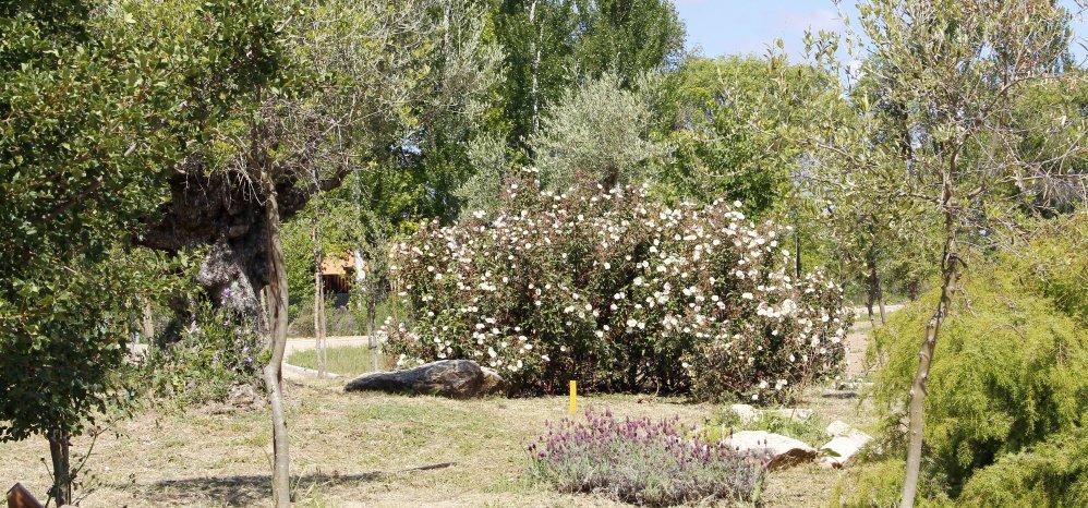 Prado de las Pavas Jardin Botanico (94)
