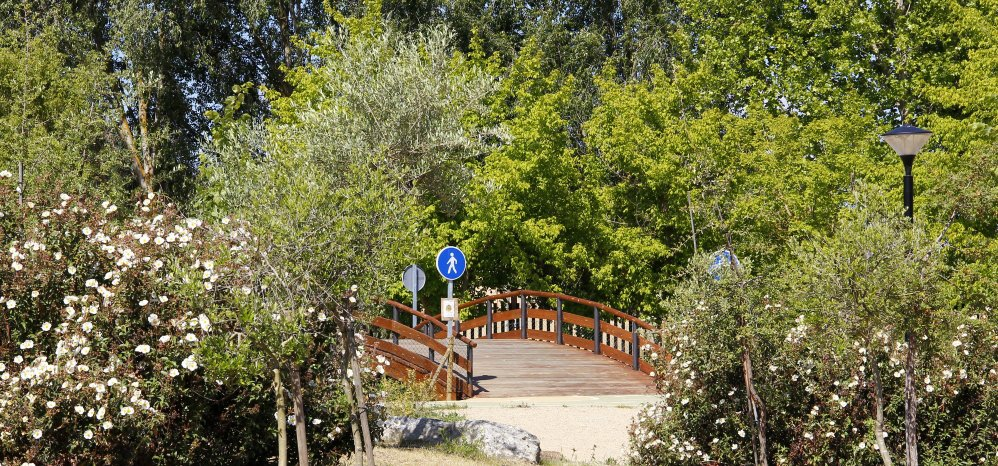 Prado de las Pavas Jardin Botanico (95)