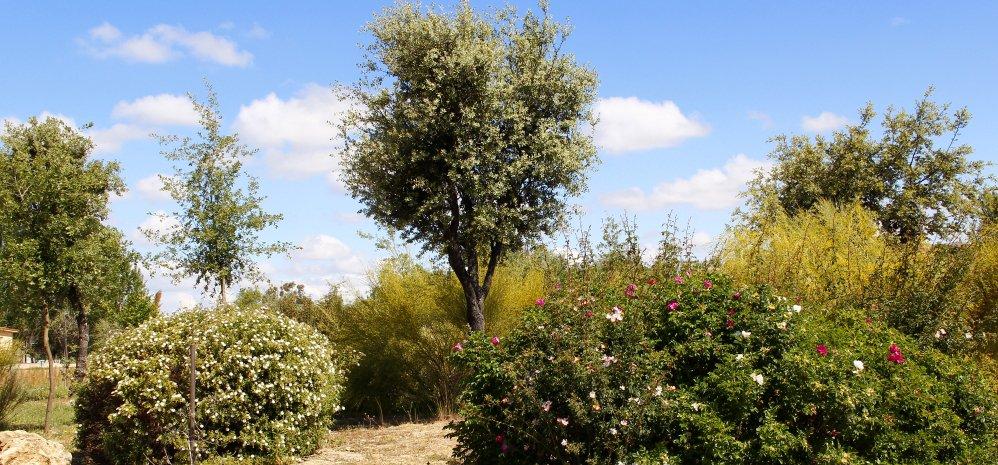 Prado de las Pavas Jardin Botanico (96)