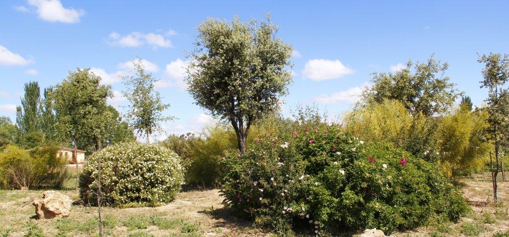 Prado de las Pavas Jardin Botanico (97)