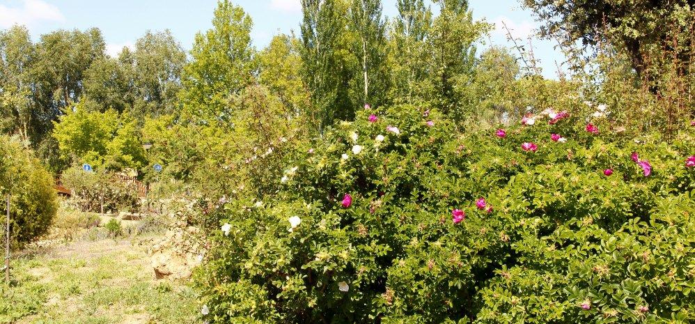 Prado de las Pavas Jardin Botanico (98)